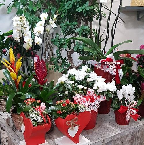 fiori-san-valentino-pisa