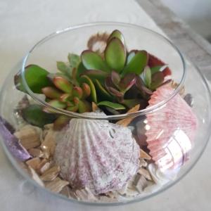 composizione-piante-grasse
