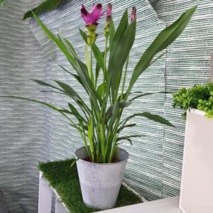 angolo-fiorito-negozio-online-piante-22