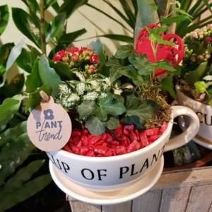 taza con piante